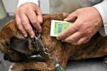 Rusza akcja bezpłatnego czipowania zwierząt