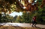 Piaseczno: Bieg złotych liści