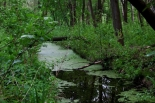 Walory przyrodnicze ziemi tarczyńskiej - stwórzmy wspólnie album