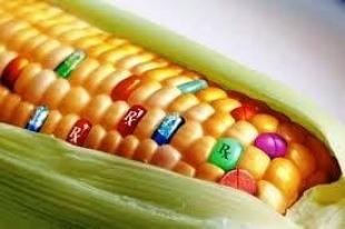 Akcja Stop GMO