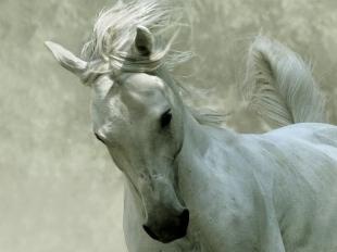 Wszyscy kochamy konie w Auchanie
