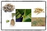 Współczesna czarownica - naturalne suplementy diety