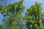 Sprzątanie lasu w Magdalence