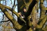 Dąb harcerzy z Zalesia w finale konkursu na Drzewo Roku