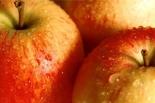 Tarczyńskie owocobranie czyli pożegnanie lata w Tarczynie