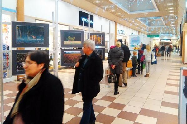 Poznaj piękno Kampinosu – wystawa fotograficzna w CH Auchan