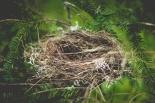 """ORLICE – warsztaty i grupa wsparcia dla kobiet z syndromem """"pustego gniazda"""""""