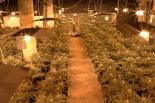 W Zgorzale zlikwidowano przez policjantów CBŚP  plantacje marihuany