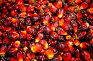 Olej rafinowany i olej palmowy i olej słonecznikowy
