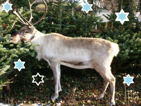 Jarmark Świąteczny w Lesznowoli