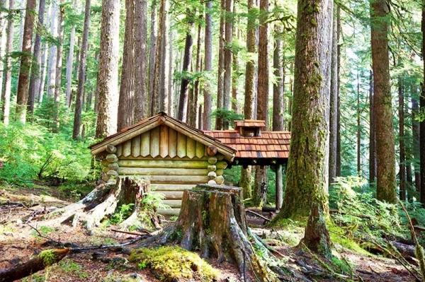 Budowa domu na działce leśnej – jak to zrobić?