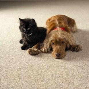 Sierść wbita w dywany czy tapicerkę?