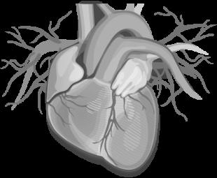 Akcja Ablacja - ablacja, migotanie przedsionków, zaburzenia rytmu serca