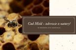 Cud Miód – zdrowie z natury