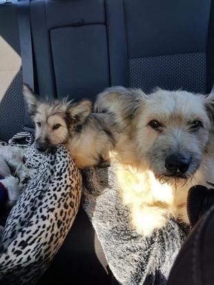 Poszukiwany dom dla dwóch psów