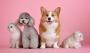 Ruszyła bezpłatna akcja sterylizacji, kastracji i chipowania zwierząt dla mieszkańców gminy Piaseczno