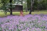 Budki lęgowe dla owadów zapylających kwiaty