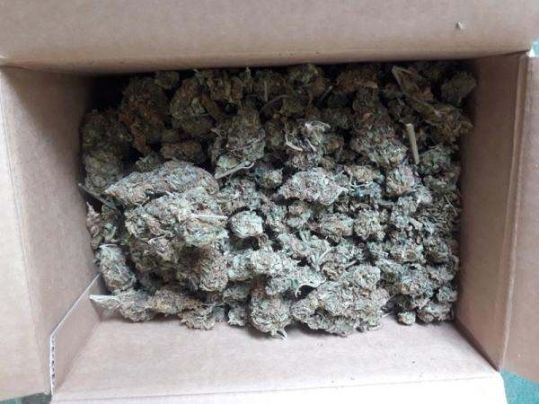 Zabezpieczono ponad 600 gramów narkotyków. To między innymi kokaina, amefetamina i marihuana
