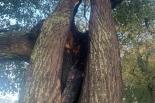 Piorun uderzył w drzewo w parku w Piasecznie