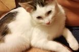 zaginęłą kotka miłka