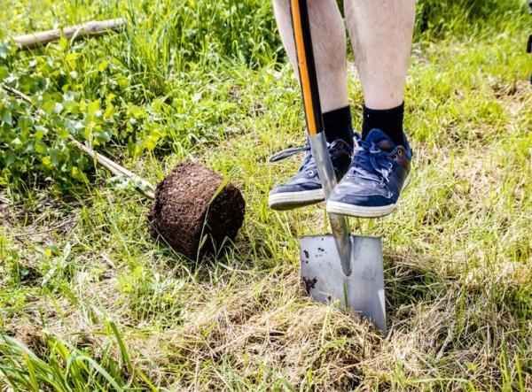Akcja sadzenia drzew przy Chyliczkowskiej